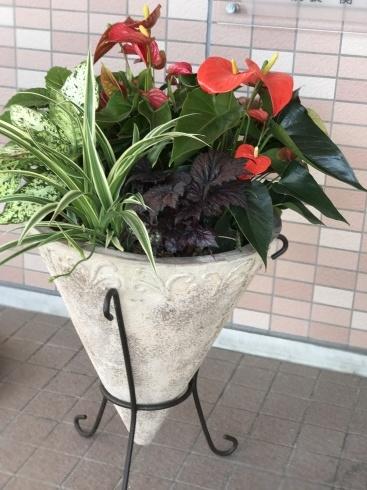 今日のレクサス宮崎装花----庭のお花やハーブも一緒に束ねました_b0137969_06202084.jpg