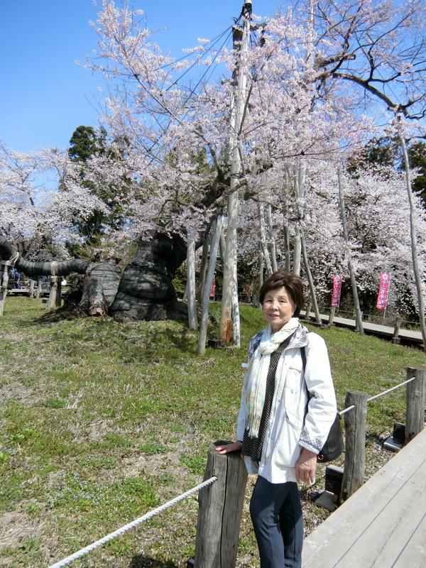 4月21日(土)東北の桜_d0278912_00015129.jpg