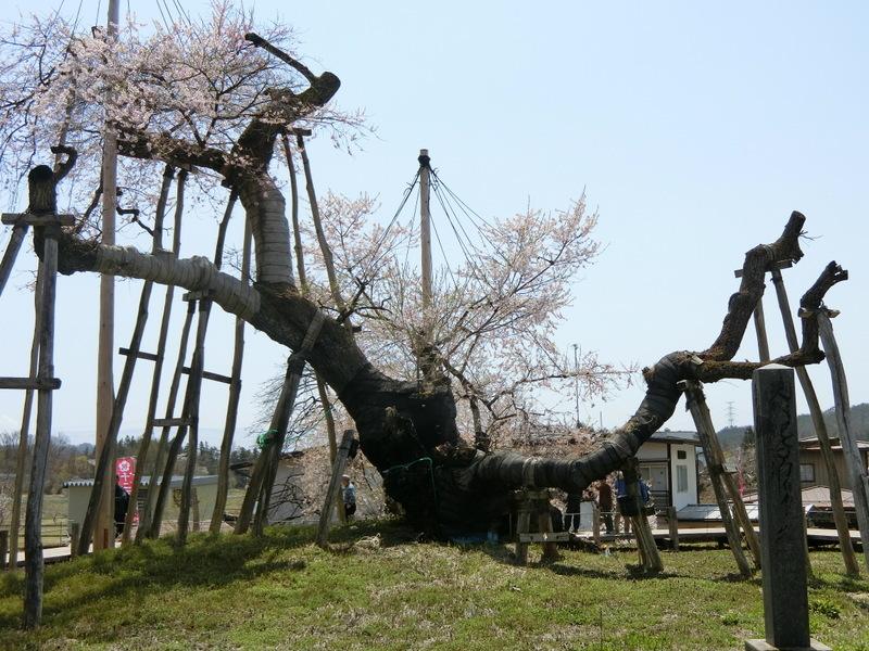 4月21日(土)東北の桜_d0278912_00022392.jpg