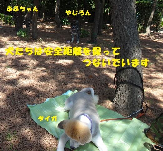f0121712_23264514.jpg