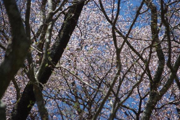 No 142  晴天の毛無山へ(2018年4月21日)_d0341514_22195598.jpg