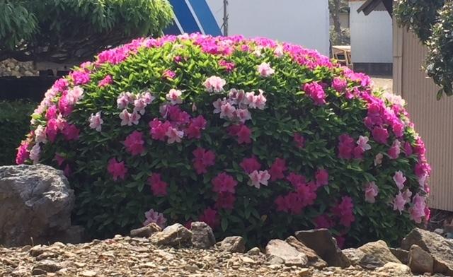 花に恵まれた休日♪_c0316026_18260976.jpg