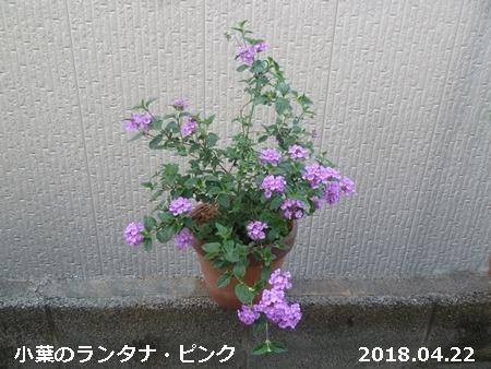 e0033229_18223277.jpg