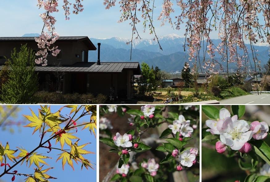 りんごの花_a0212730_20285591.jpg