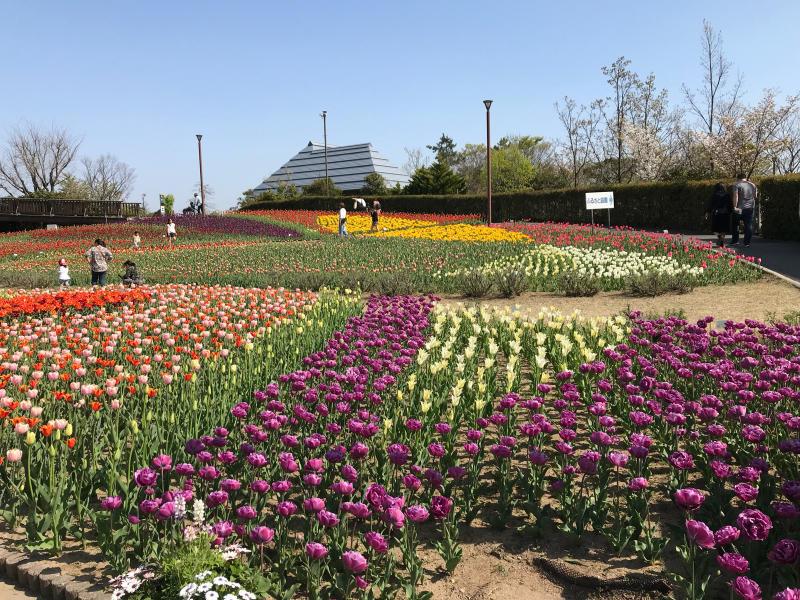 鮭いくら丼    道の駅 新潟ふるさと村_a0359239_17124073.jpg