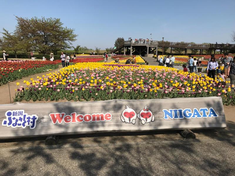 鮭いくら丼    道の駅 新潟ふるさと村_a0359239_17130306.jpg