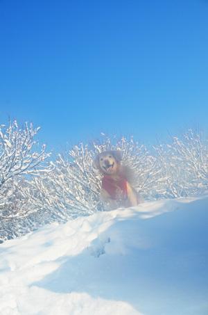 雪ーーーーーーっ♪_f0044853_14345955.jpg