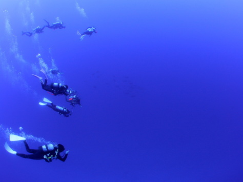 4月22日 ジンベエザメ whale shark_d0113459_17193857.jpg