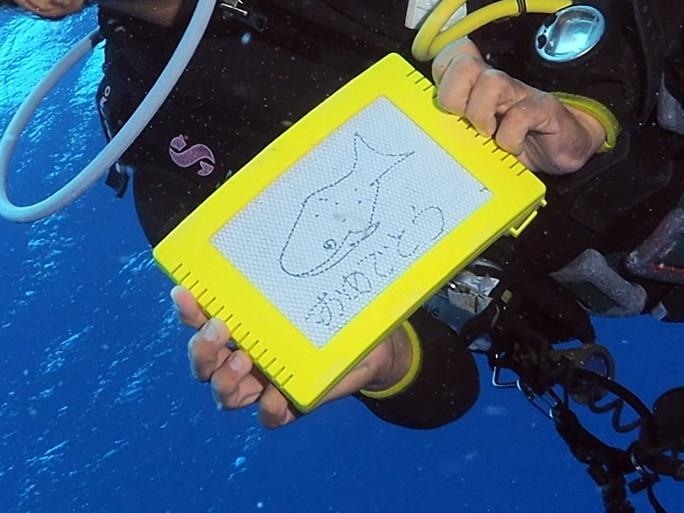 4月22日 ジンベエザメ whale shark_d0113459_17201009.jpg