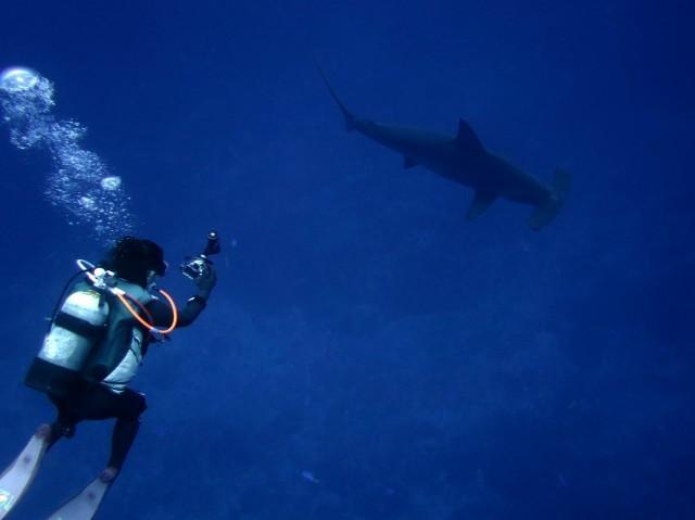 4月22日 ジンベエザメ whale shark_d0113459_18121706.jpg
