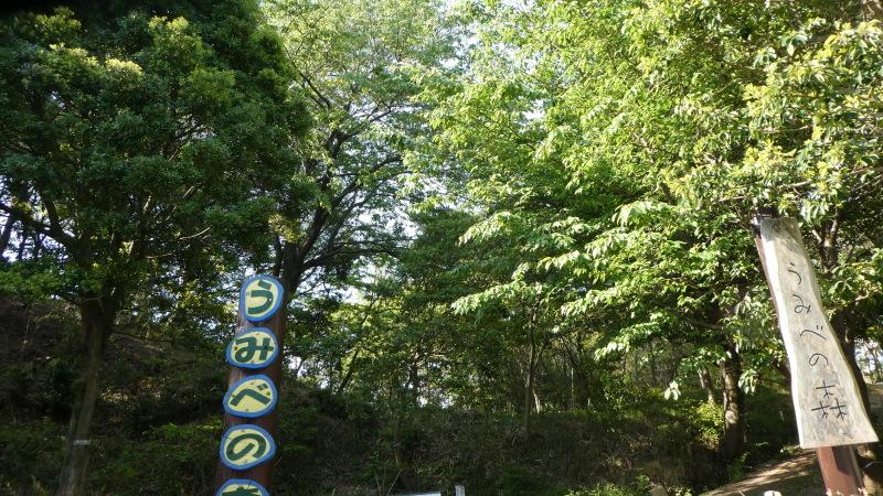 枯れヤマザクラの伐採・・・うみべの森_c0108460_18361825.jpg