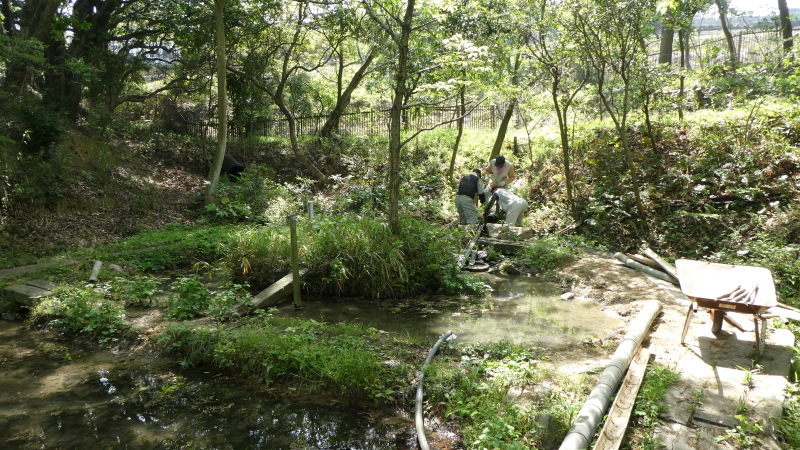 枯れヤマザクラの伐採・・・うみべの森_c0108460_18412828.jpg