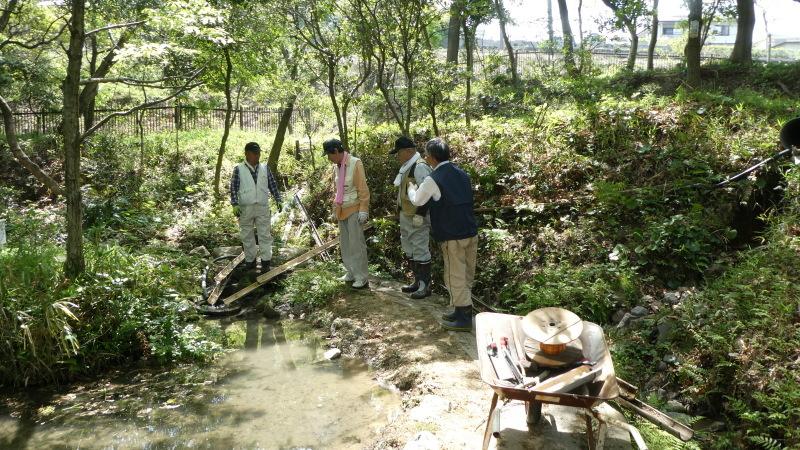 枯れヤマザクラの伐採・・・うみべの森_c0108460_18440378.jpg