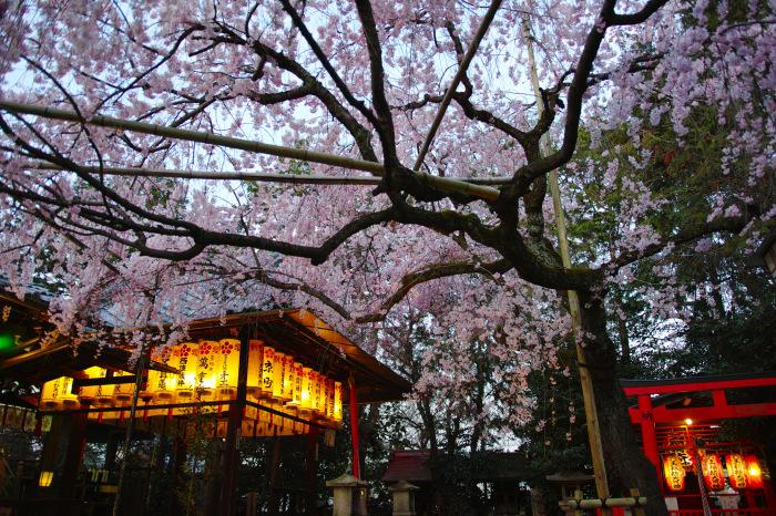 京都 桜2018水火天満宮_f0021869_19583549.jpg