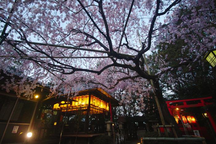 京都 桜2018水火天満宮_f0021869_19583604.jpg
