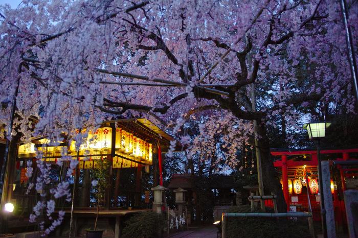 京都 桜2018水火天満宮_f0021869_20010067.jpg