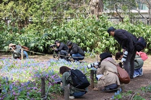 カタクリ、コブシ、亀の甲羅干し。 春ですね。_f0362073_13002842.jpg