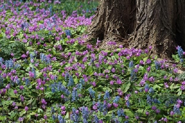 カタクリ、コブシ、亀の甲羅干し。 春ですね。_f0362073_13004720.jpg