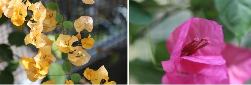 カタクリ、コブシ、亀の甲羅干し。 春ですね。_f0362073_13041767.jpg