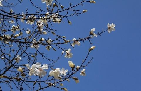 カタクリ、コブシ、亀の甲羅干し。 春ですね。_f0362073_13052012.jpg