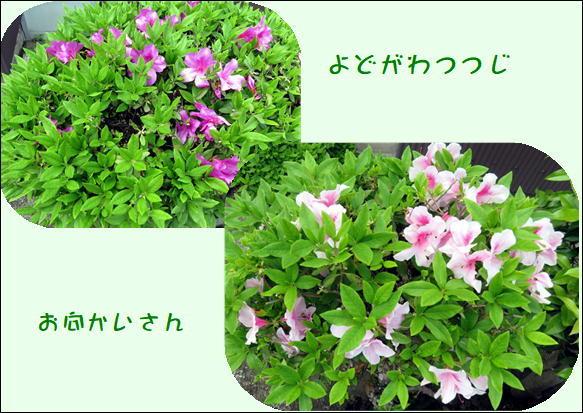 f0003174_10480098.jpg