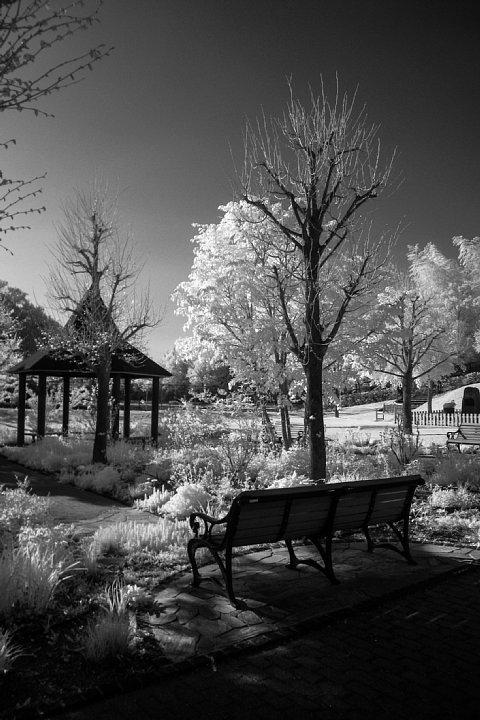 白く輝く樹木を鑑賞する透明人間たち_d0353489_18330944.jpg