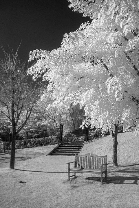白く輝く樹木を鑑賞する透明人間たち_d0353489_18385671.jpg