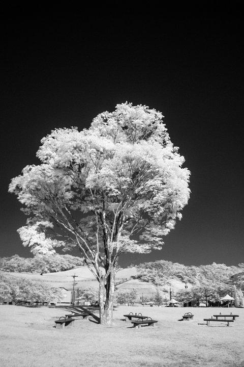 白く輝く樹木を鑑賞する透明人間たち_d0353489_18390780.jpg