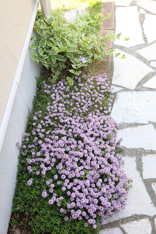 居心地の良い庭_b0275998_13203340.jpg