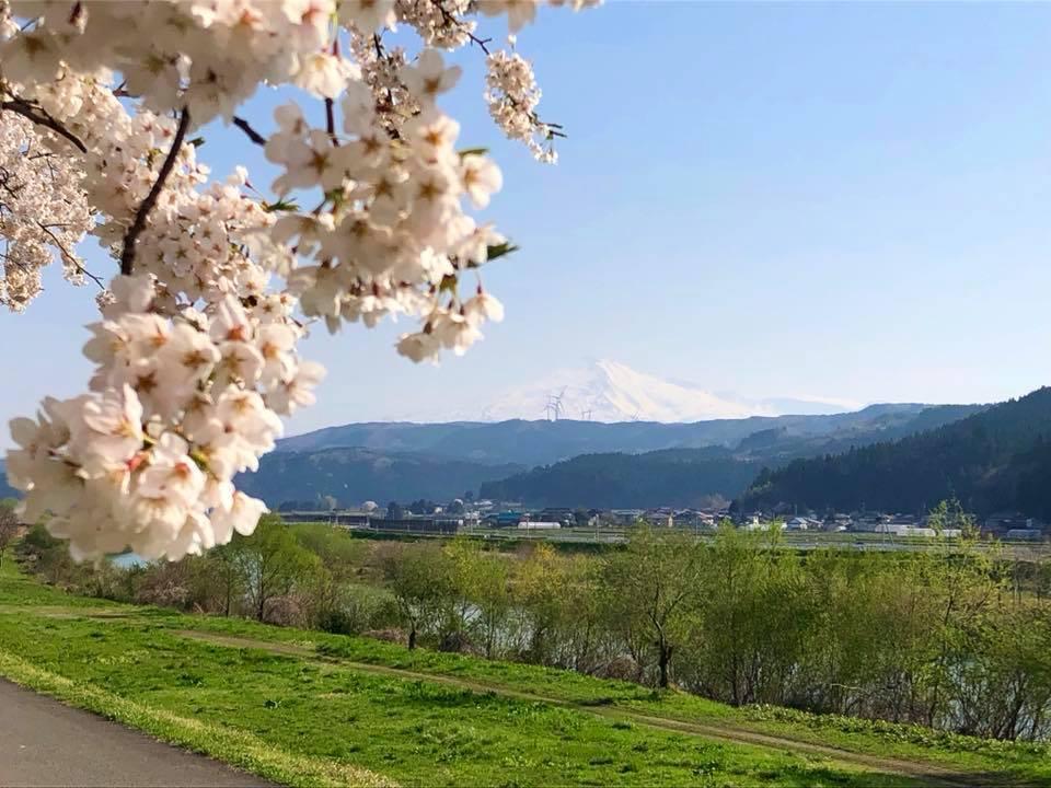 🌸桜 さくら SAKURA🌸 _e0197227_14511824.jpg
