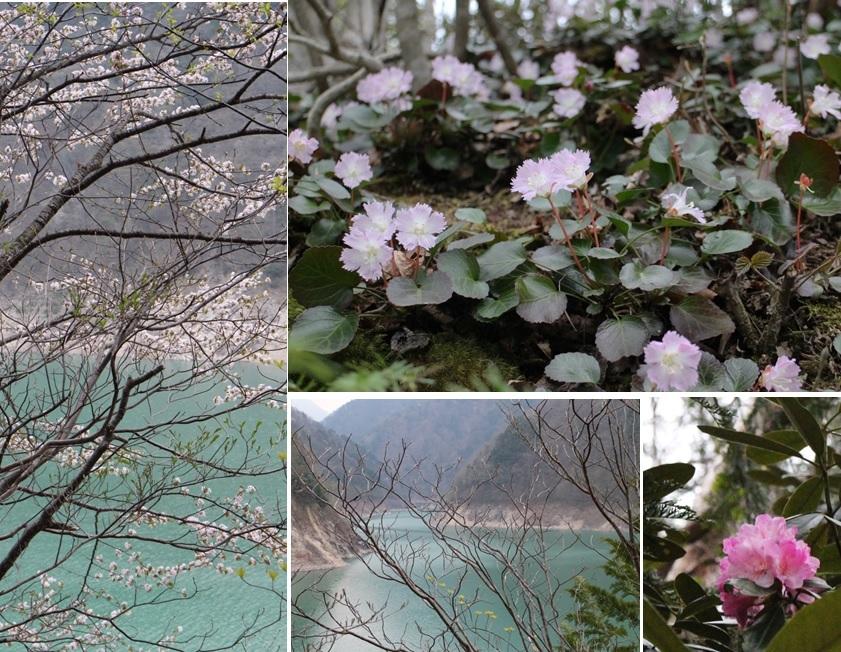大町ダムの花たち_a0212730_21500393.jpg