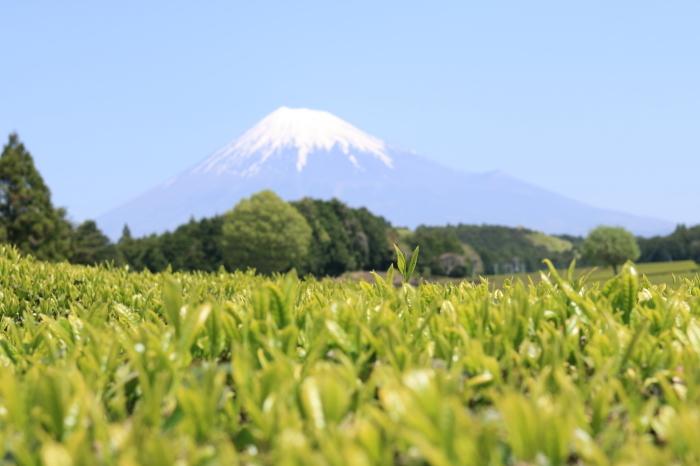【大渕笹場/今宮の茶畑】静岡ドライブ part 1_f0348831_23185192.jpg