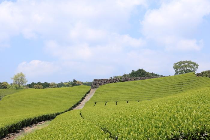 【大渕笹場/今宮の茶畑】静岡ドライブ part 1_f0348831_23201982.jpg