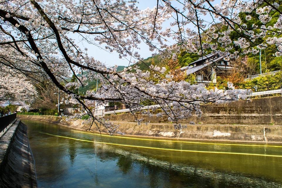 2018桜~山科疎水_e0363038_19241622.jpg