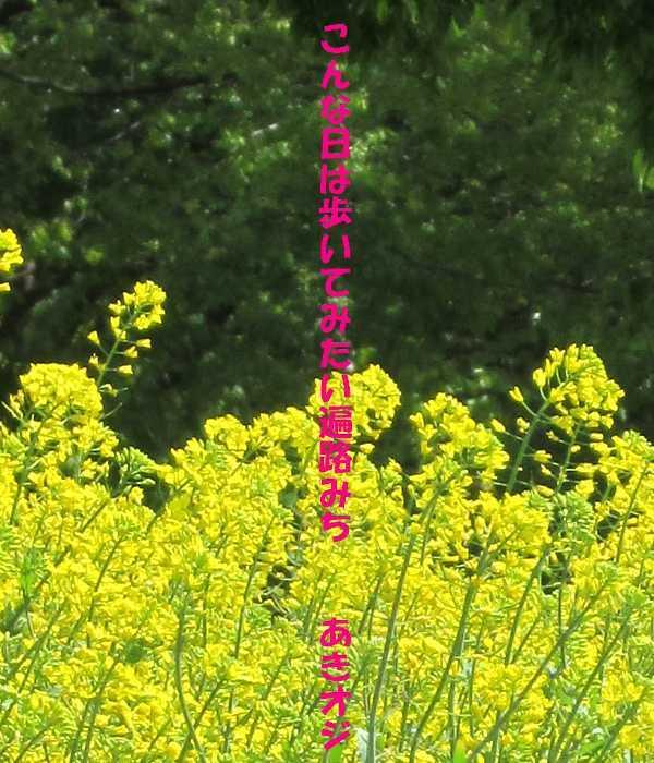 f0117041_04420116.jpg