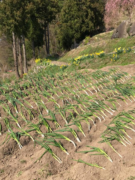 畑‼️_b0185375_17511399.jpg