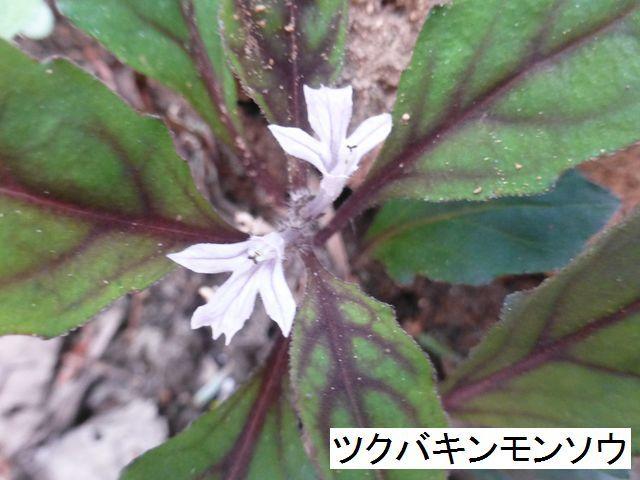 d0351575_20121619.jpg