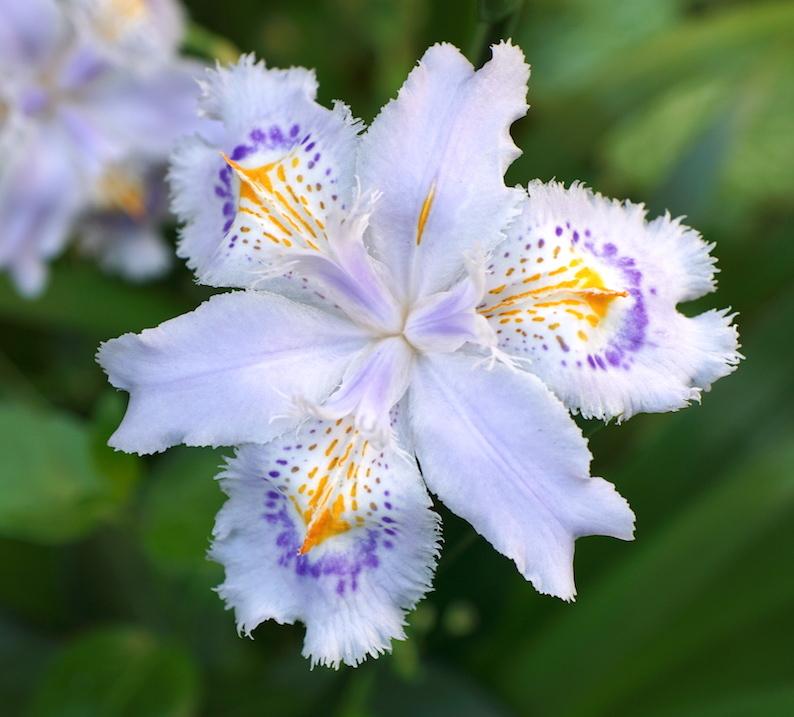 困ったときの花だのみ_b0057679_09282247.jpg