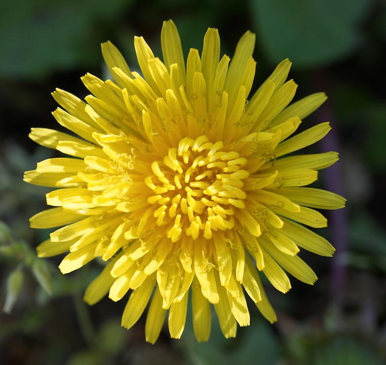 困ったときの花だのみ_b0057679_09283385.jpg
