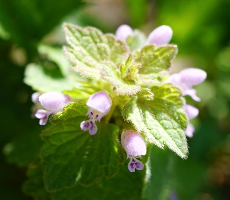 困ったときの花だのみ_b0057679_09284215.jpg