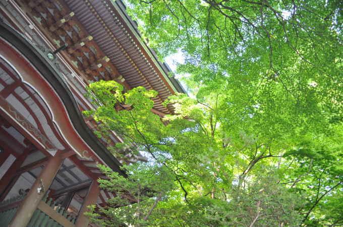 新緑の柞原八幡宮_f0191383_14501776.jpg