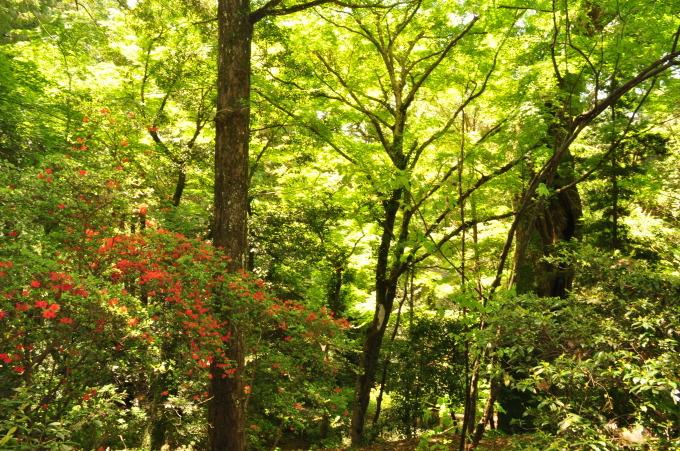 新緑の柞原八幡宮_f0191383_14501857.jpg