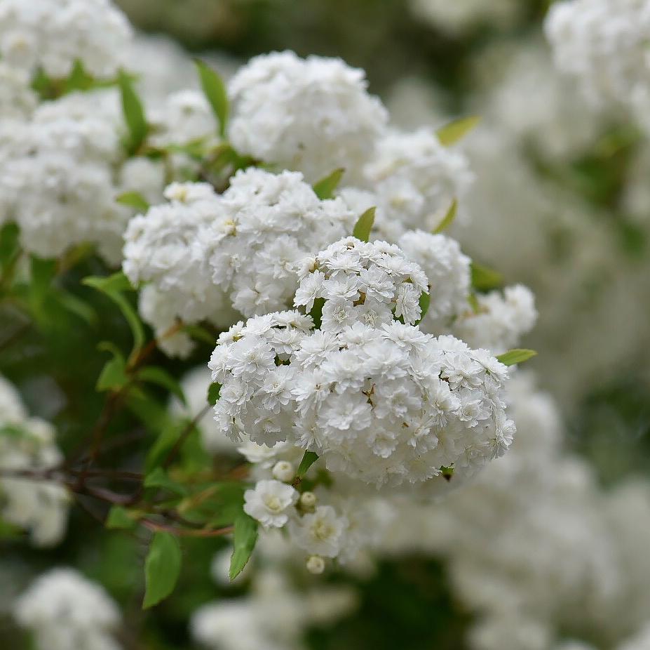 花があふれて...。_f0099102_19095841.jpg
