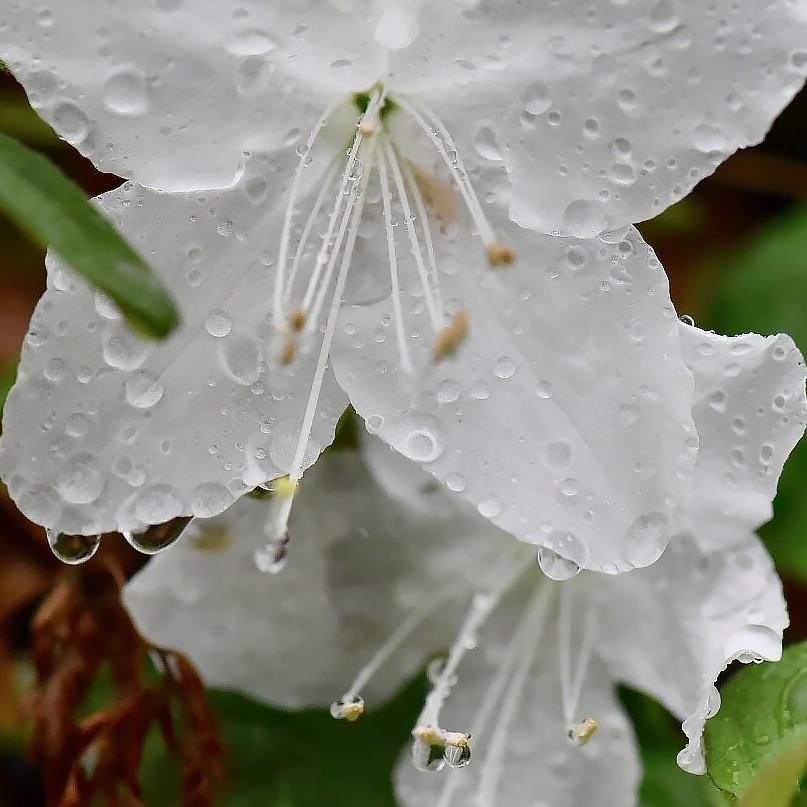 花があふれて...。_f0099102_19102263.jpg