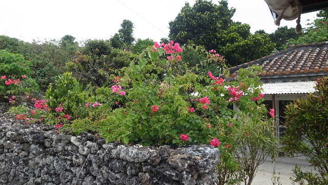 竹富島観光(2) 水牛車でのんびり観光、そして星砂の浜_c0011649_13132497.jpg