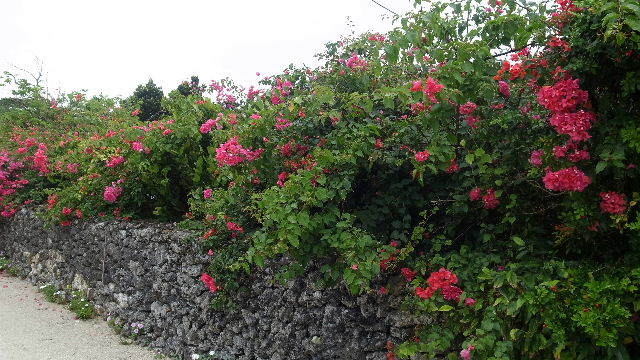 竹富島観光(2) 水牛車でのんびり観光、そして星砂の浜_c0011649_13135034.jpg