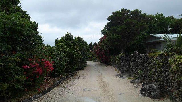 竹富島観光(2) 水牛車でのんびり観光、そして星砂の浜_c0011649_13140988.jpg