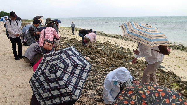 竹富島観光(2) 水牛車でのんびり観光、そして星砂の浜_c0011649_13291281.jpg