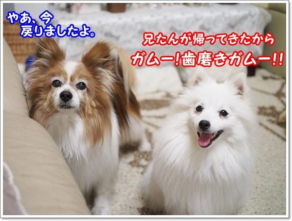 d0013149_00162801.jpg