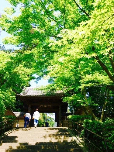 新緑の鎌倉へ。オトナの遠足第2弾。_f0074254_01543542.jpeg